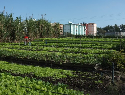 Promoting Clean and Green Food in Global Cities