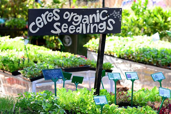 nursery-organic-seedlings