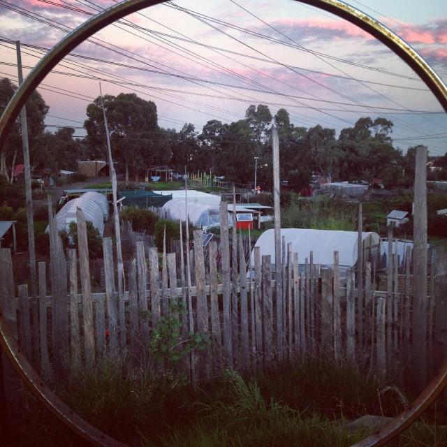 Dusk over the park Chooks are heading to bed pairshellip