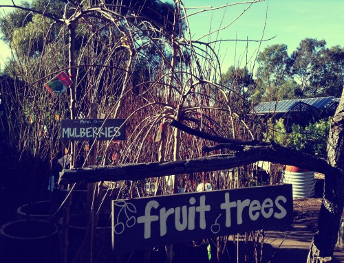 Fruit Trees-a-Comin